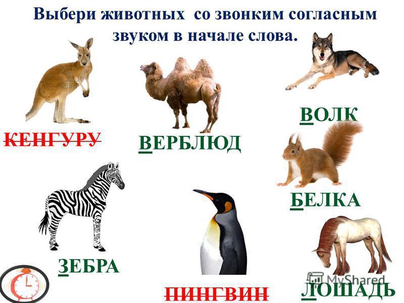 ВОЛК ЗАЯЦ КАБАН ЛИСА Выбери животных с глухим согласным звуком в начале слова. СОВА СЛОН ТИГР ПОПУГАЙ