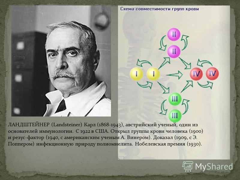 ЛАНДШТЕЙНЕР (Landsteiner) Карл (1868-1943), австрийский ученый, один из основателей иммунологии. С 1922 в США. Открыл группы крови человека (1900) и резус-фактор (1940, с американским ученым А. Винером). Доказал (1909, с Э. Поппером) инфекционную при