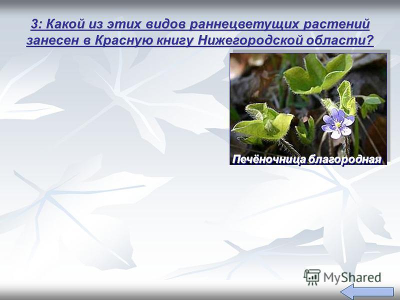 3: Какой из этих видов раннецветущих растений занесен в Красную книгу Нижегородской области? Печёночница благородная