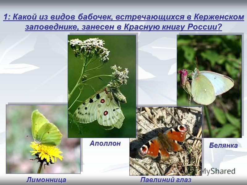 1: Какой из видов бабочек, встречающихся в Керженском заповеднике, занесен в Красную книгу России? Аполлон Павлиний глаз Лимонница Белянка