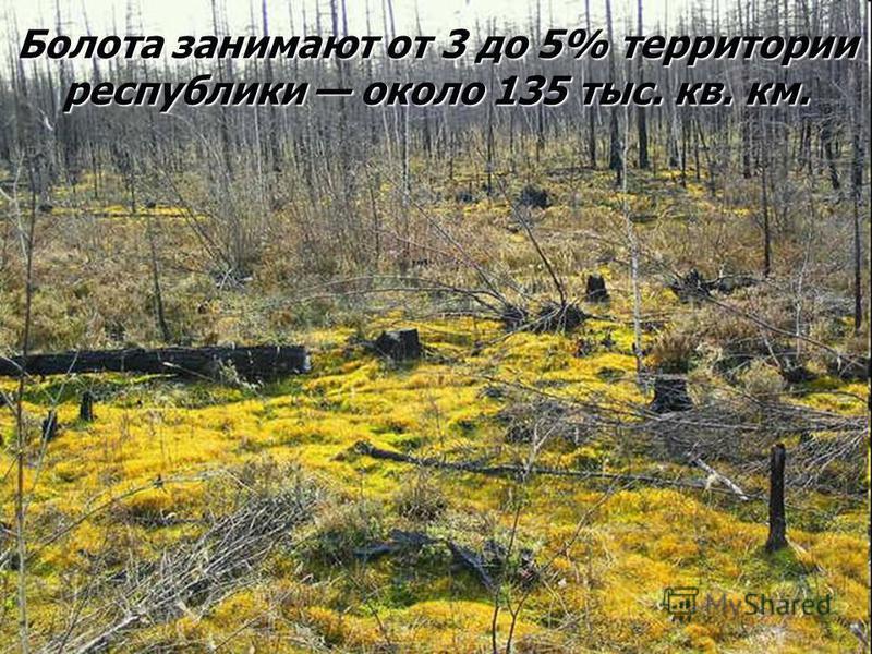 Болота занимают от 3 до 5% территории республики около 135 тыс. кв. км.