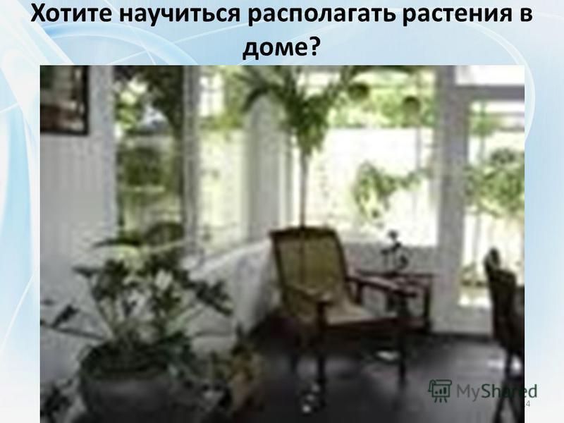 Хотите научиться располагать растения в доме? 14
