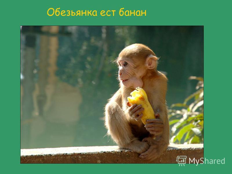 Обезьянка ест банан
