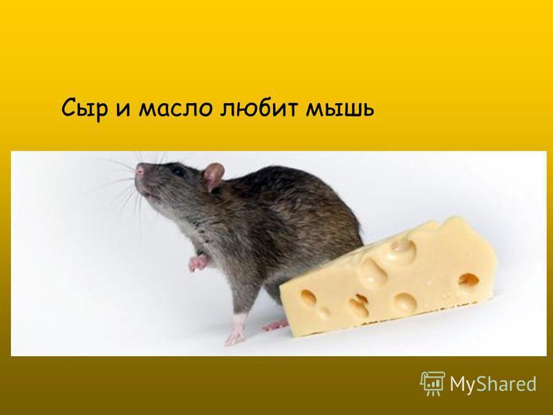 Сыр и масло любит мышь