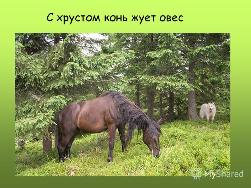 С хрустом конь жует овес