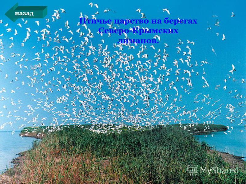 Птичье царство на берегах Северо-Крымских лиманов. назад