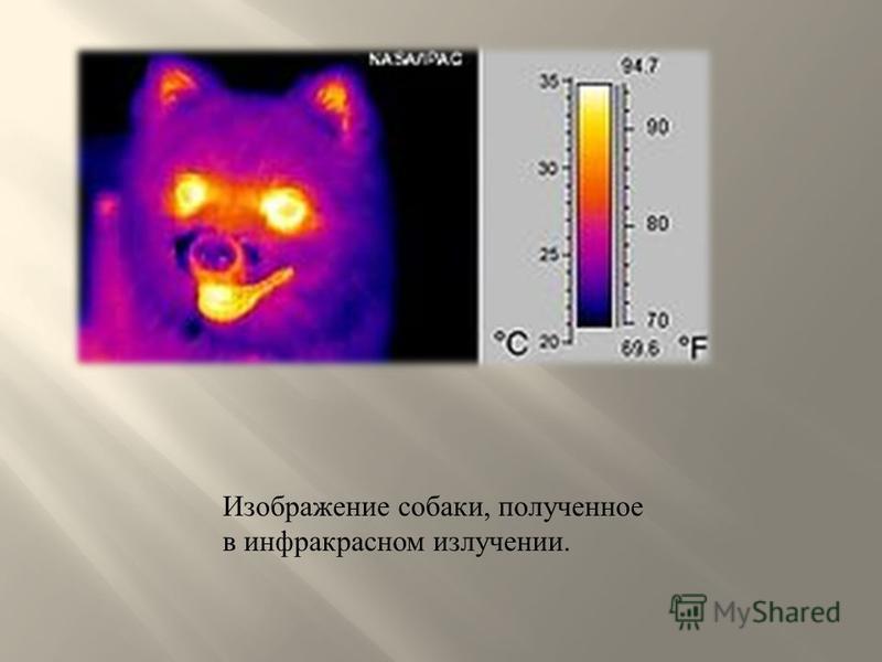 Изображение собаки, полученное в инфракрасном излучении.