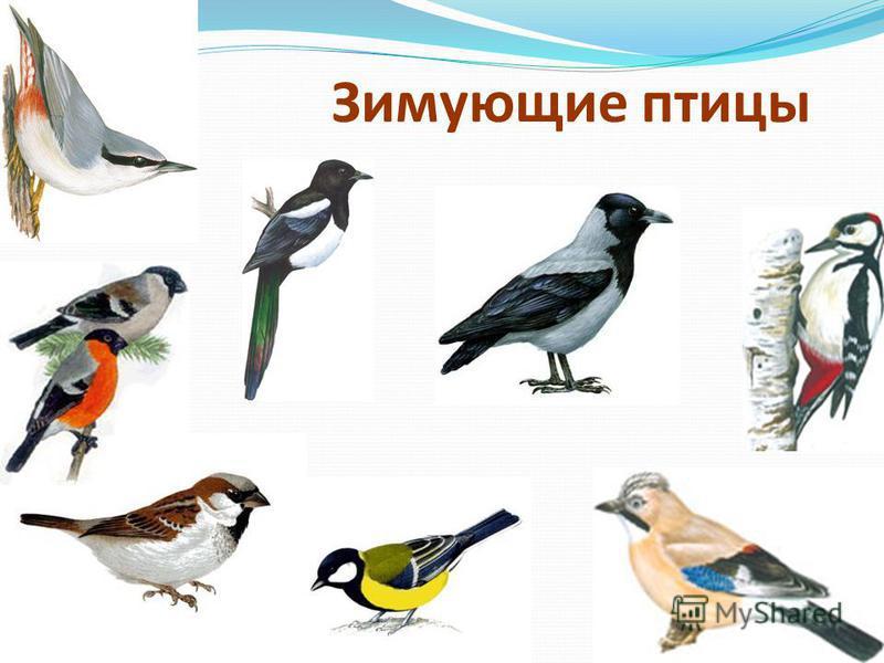 Задачи: 1. Систематизировать и обогатить знание детей о зимующих птицах. 2. Формирование исследовательских умений: Проводить наблюдения; Работать с дополнительной литературой; Выдвигать гипотезу и делать выводы; Представлять результаты исследовательс