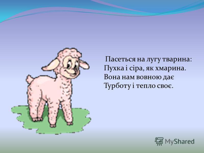 Пасеться на лугу тварина: Пухка і сіра, як хмарина. Вона нам вовною дає Турботу і тепло своє.