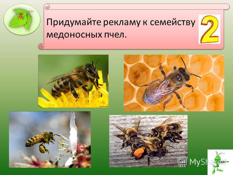 Придумайте рекламу к семейству медоносных пчел.