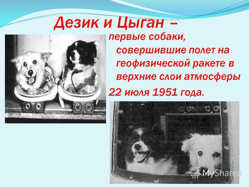 Дезик и Цыган – первые собаки, совершившие полет на геофизической ракете в верхние слои атмосферы 22 июля 1951 года.