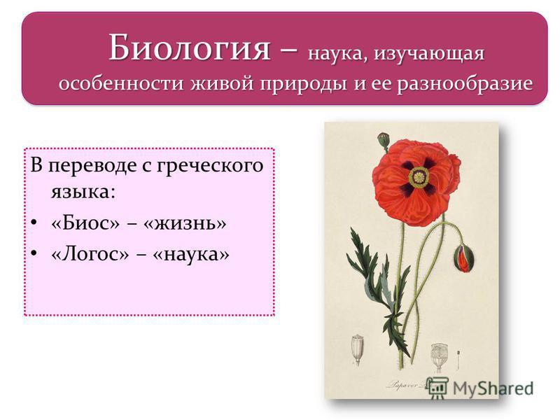 В переводе с греческого языка: «Биос» – «жизнь» «Логос» – «наука» Биология – наука, изучающая особенности живой природы и ее разнообразие