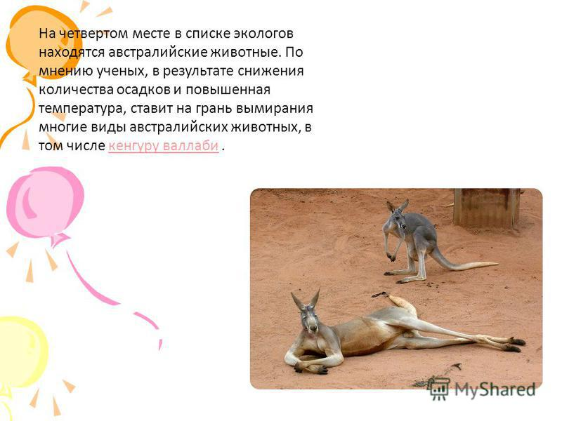 На четвертом месте в списке экологов находятся австралийские животные. По мнению ученых, в результате снижения количества осадков и повышенная температура, ставит на грань вымирания многие виды австралийских животных, в том числе кенгуру валлаби.кенг
