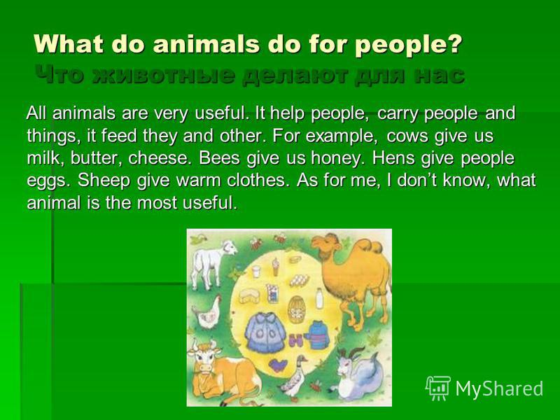 What do animals do for people? Что животные делают для нас All animals are very useful. It help people, carry people and things, it feed they and other. For example, cows give us milk, butter, cheese. Bees give us honey. Hens give people eggs. Sheep