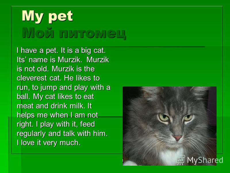 My pet Мой питомец I have a pet. It is a big cat. Its name is Murzik. Murzik is not old. Murzik is the cleverest cat. He likes to run, to jump and play with a ball. My cat likes to eat meat and drink milk. It helps me when I am not right. I play with