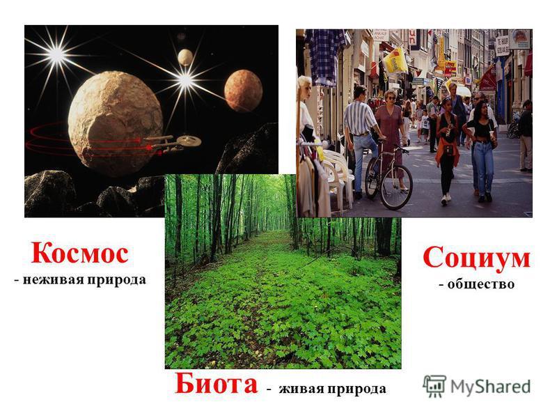 Космос - неживая природа Биота - живая природа Социум - общество