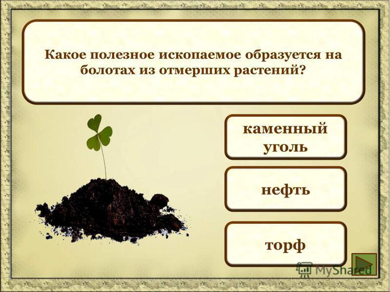 Какое полезное ископаемое образуется на болотах из отмерших растений? каменный уголь нефть торф