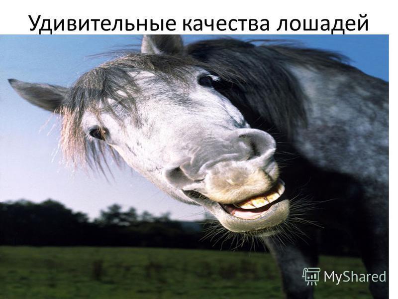 Удивительные качества лошадей