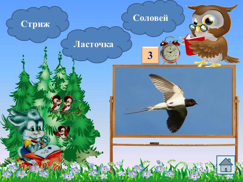 Сойка Синица Снегирь Эта птичка на зиму перебирается к жилью человека. У этой птички есть свой именной праздник. 2 2