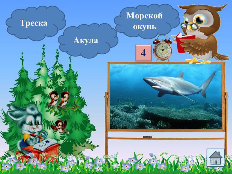 Треска Сельдь Минтай Эта морская рыба серебристого цвета. Её готовят «под шубой». 3 3