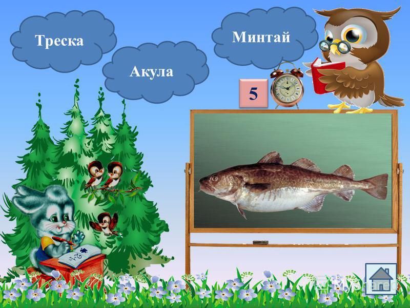 Треска Акула Морской окунь Эта хищная морская рыба опасна. Она часто нападает на людей. 4 4