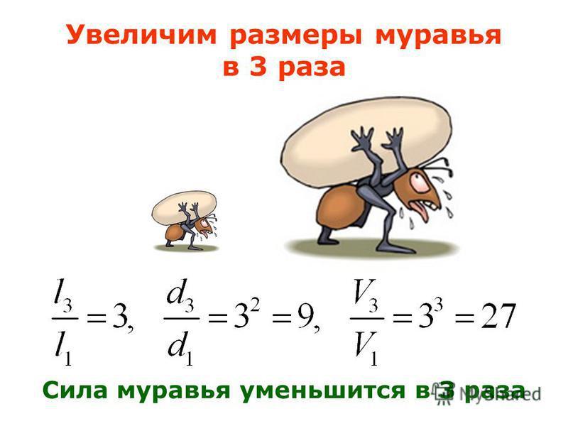 Увеличим размеры муравья в 3 раза Сила муравья уменьшится в 3 раза