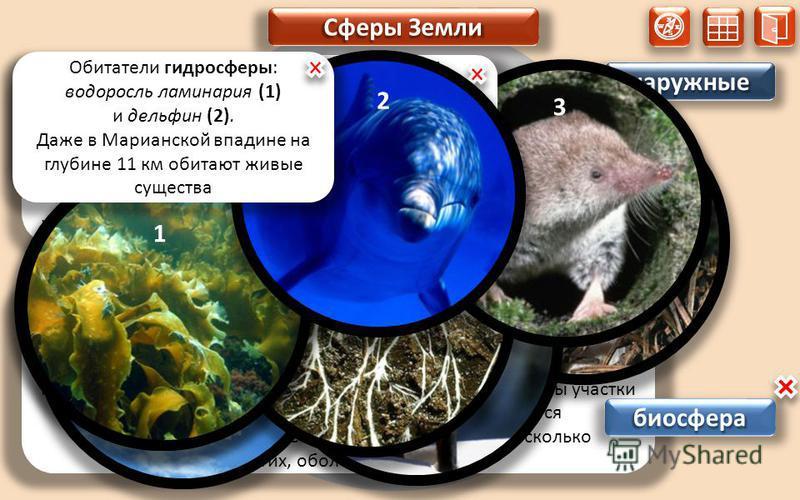 N S W E наружные наружные Термин «биосфера» происходит от греческих слов: «био» – жизнь и «сфера» - оболочка. Биосфера - это живая оболочка Земли, в состав которой входит всё живое, что есть на планете. Организмы обитают и в лотосфере, и в гидросфере