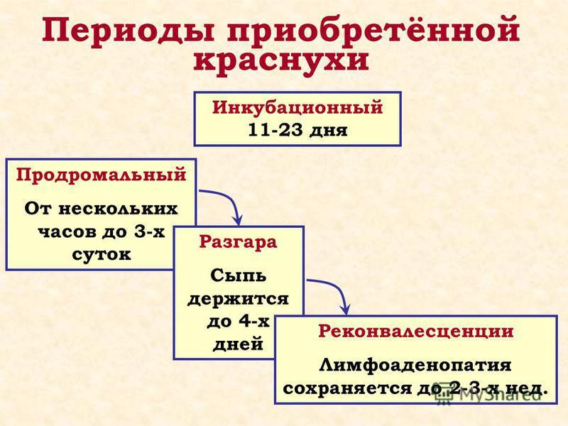 Периоды приобретённой краснухи Инкубационный 11-23 дня Продромальный От нескольких часов до 3-х суток Разгара Сыпь держится до 4-х дней Реконвалесценции Лимфоаденопатия сохраняется до 2-3-х нед.