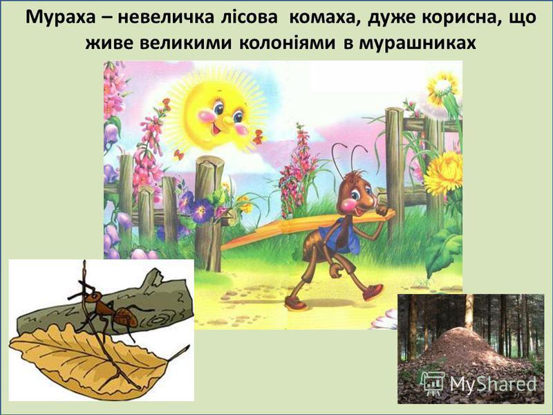 . Мураха – невеличка лісова комаха, дуже корисна, що живе великими колоніями в мурашниках