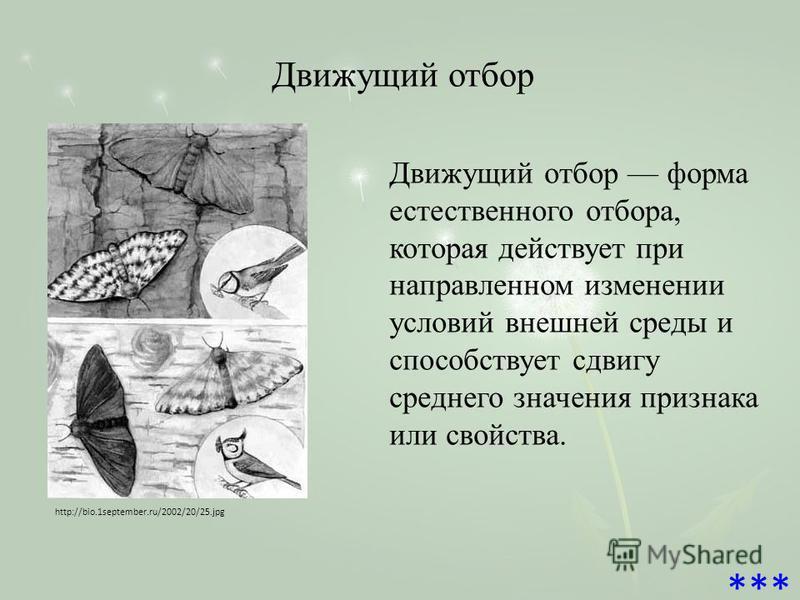 Движущий отбор http://bio.1september.ru/2002/20/25. jpg Движущий отбор форма естественного отбора, которая действует при направленном изменении условий внешней среды и способствует сдвигу среднего значения признака или свойства. ***