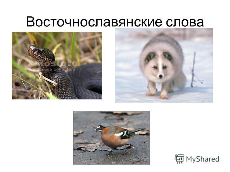 Восточнославянские слова