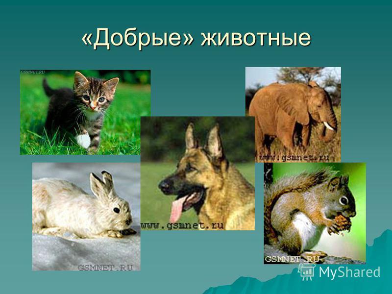 «Добрые» животные