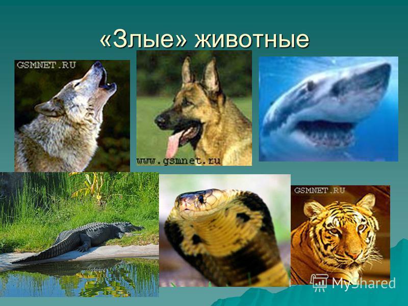 «Злые» животные
