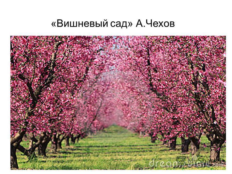«Вишневый сад» А.Чехов
