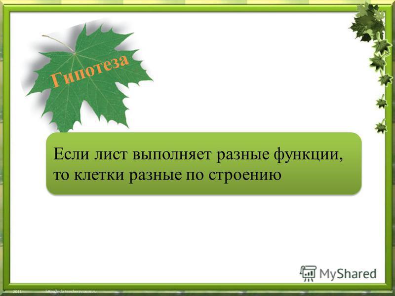 Если лист выполняет разные функции, то клетки разные по строению Гипотеза