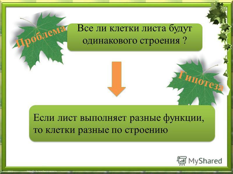 Если лист выполняет разные функции, то … Если лист выполняет разные функции, то клетки разные по строению Проблема Все ли клетки листа будут одинакового строения ? Гипотеза