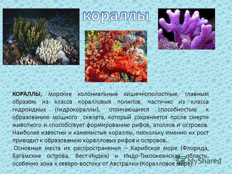 КОРАЛЛЫ, морские колониальные кишечнополостные, главным образом из класса коралловых полипов, частично из класса гидроидных (гидрокораллы), отличающиеся способностью к образованию мощного скелета, который сохраняется после смерти животного и способст