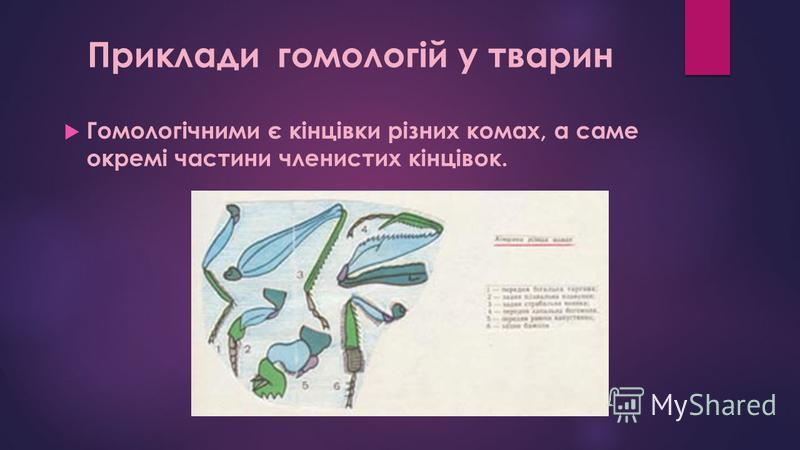Гомологічними є кінцівки різних комах, а саме окремі частини членистих кінцівок. Приклади гомологій у тварин