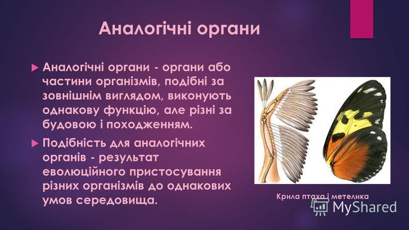 Аналогічні органи Аналогічні органи - органи або частини організмів, подібні за зовнішнім виглядом, виконують однакову функцію, але різні за будовою і походженням. Подібність для аналогічних органів - результат еволюційного пристосування різних орган