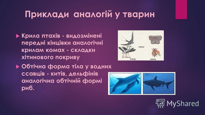 Крила птахів - видозмінені передні кінцівки аналогічні крилам комах - складки хітинового покриву Обтічна форма тіла у водних ссавців - китів, дельфінів аналогічна обтічній формі риб. Приклади аналогій у тварин