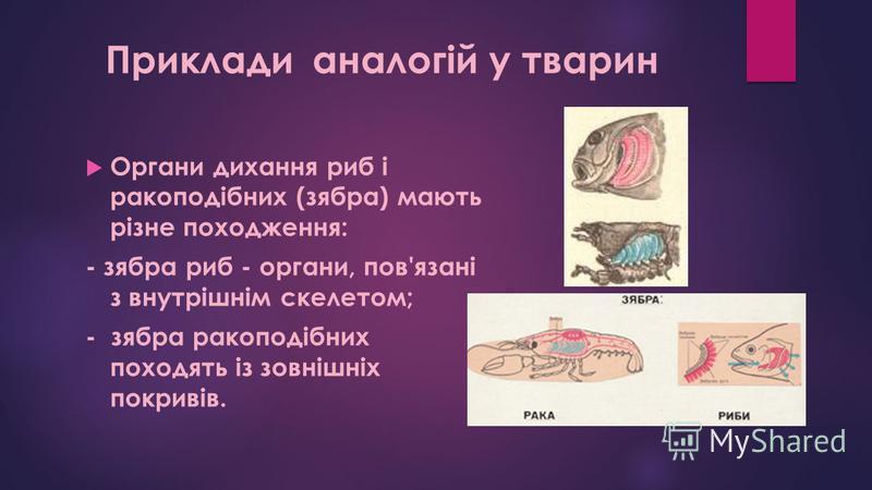 Органи дихання риб і ракоподібних (зябра) мають різне походження: - зябра риб - органи, пов'язані з внутрішнім скелетом; - зябра ракоподібних походять із зовнішніх покривів. Приклади аналогій у тварин
