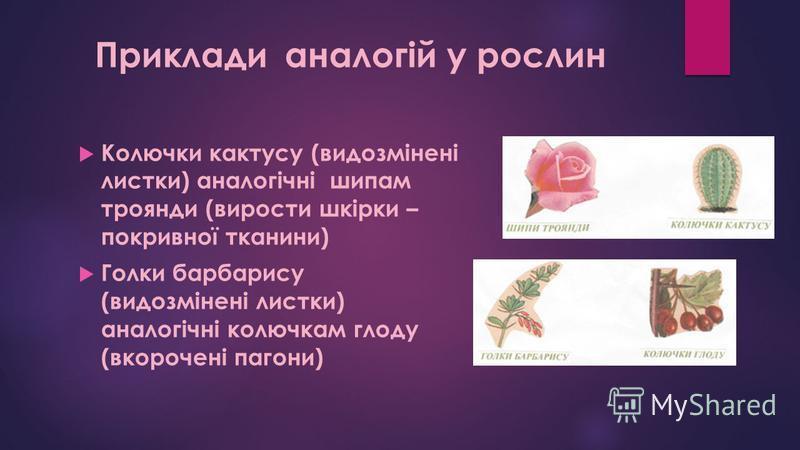 Колючки кактусу (видозмінені листки) аналогічні шипам троянди (вирости шкірки – покривної тканини) Голки барбарису (видозмінені листки) аналогічні колючкам глоду (вкорочені пагони) Приклади аналогій у рослин
