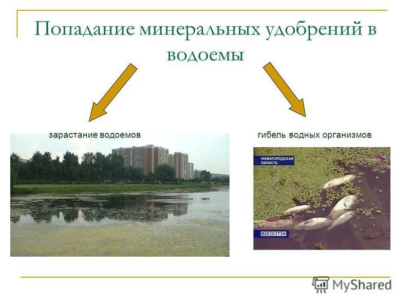 Попадание минеральных удобрений в водоемы зарастание водоемов гибель водных организмов