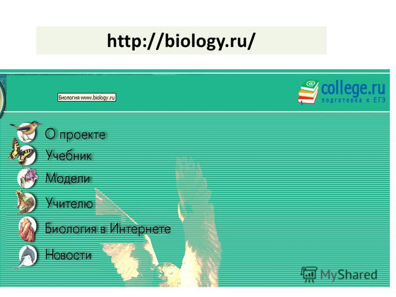 http://biology.ru/