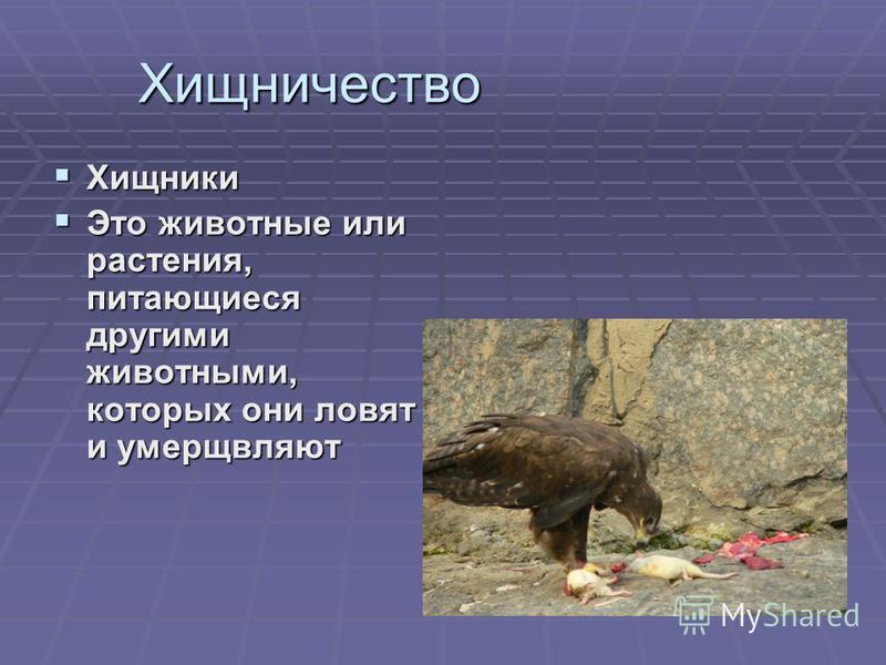Хищничество Хищники Хищники Это животные или растения, питающиеся другими животными, которых они ловят и умерщвляют Это животные или растения, питающиеся другими животными, которых они ловят и умерщвляют