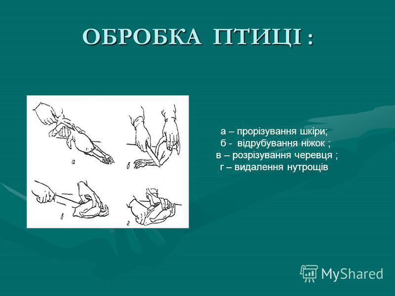 ОБРОБКА ПТИЦІ : а – прорізування шкіри; б - відрубування ніжок ; в – розрізування черевця ; г – видалення нутрощів