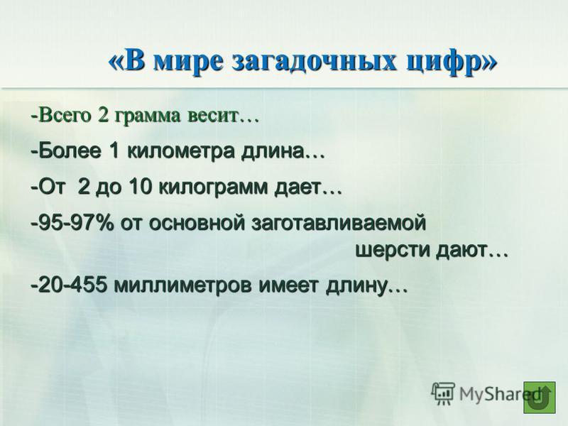 «В мире загадочных цифр» -Всего 2 грамма весит… -Более 1 километра длина… -От 2 до 10 килограмм дает… -95-97% от основной заготавливаемой шерсти дают… шерсти дают… -20-455 миллиметров имеет длину…