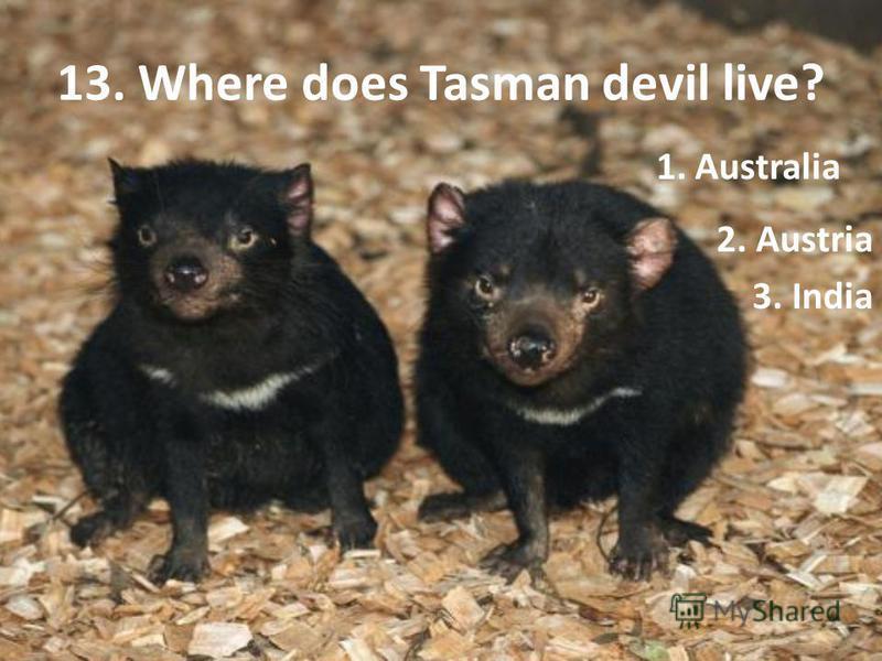 13. Where does Tasman devil live? 2. Austria 3. India 1. Australia