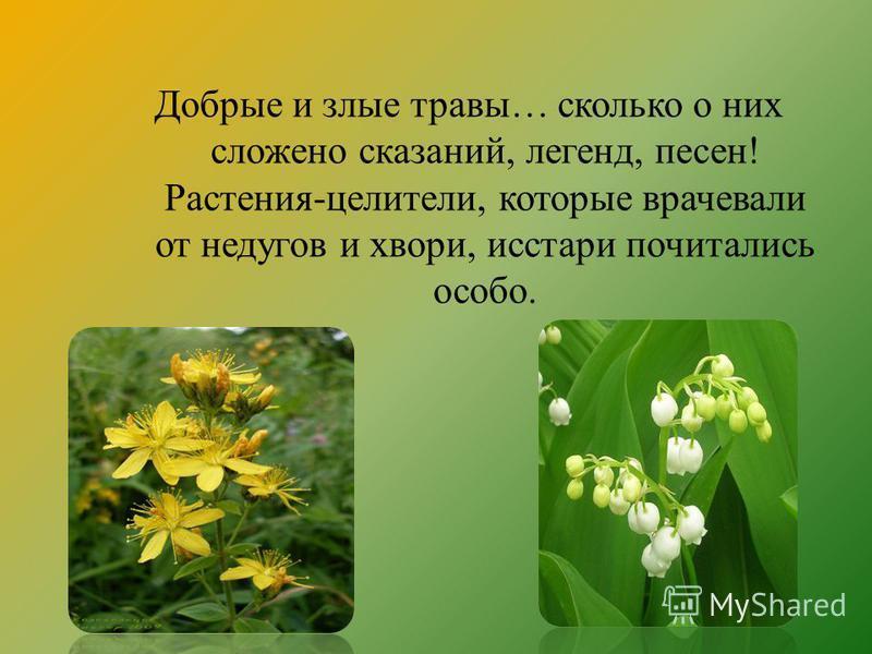 Добрые и злые травы… сколько о них сложено сказаний, легенд, песен! Растения-целители, которые врачевали от недугов и хвори, исстари почитались особо.