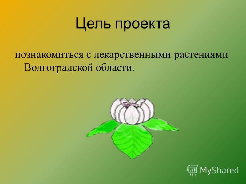 Цель проекта познакомиться с лекарственными растениями Волгоградской области.